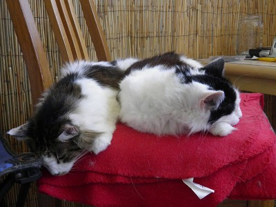 two cats sleeping on top of a red blanket